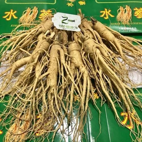 Sâm tươi Hàn Quốc (7, 8 củ / 0,5kg)